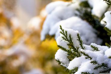 albero_neve_ok